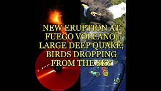 Download NEW ERUPTION AT FUEGO VOLCANO, LARGE DEEP QUAKE, BIRDS DROPPING FROM THE SKY Video