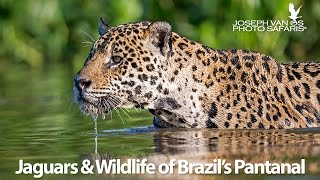 Download Jaguars & Wildlife of Brazil's Pantanal - Photo Tour Video