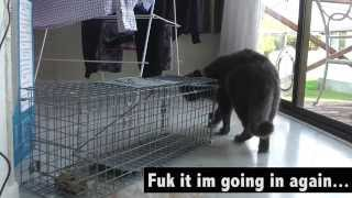 Download Catching the neighbours cat Video
