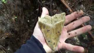 Download Collecting Megalodon Teeth and other Fossils in Summerville SC Video
