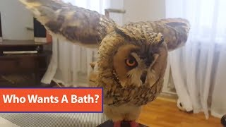 Download Owl Takes Bath With Spray Bottle Video