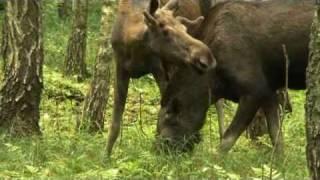 Download Dolina i Bagna Biebrzy - Najlepsza Europejska Destynacja Turystyczna 2010 (EDEN Award Poland) Video