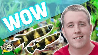 Download NO WATER CHANGES - Tropical Fish Store Tour. Over 25 years, no water changes! Video