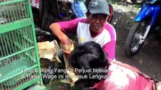 Download Hebohnya Pasar Burung & Ayam Aduan Tradisional Wage Pedan Klaten Video