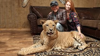 Download 'We Live With 220 Lions And Tigers': BEAST BUDDIES Video