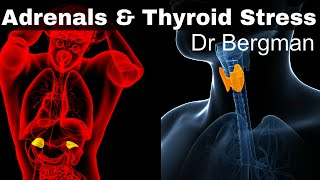 Download How to Heal Thyroid and Adrenal Fatigue Video