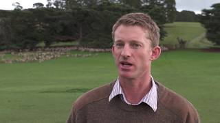 Download Geographical indications, Tasmania - Sheep Video