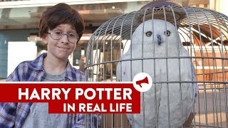 Download Harry Potter In Real Life - Movies In Real Life (Episode 8) Video