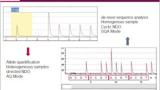 Download Pyrosequencing — technology for microbial identification and resistance screening assays Video