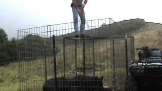 Download Pig Trap in Hawaii - Upgraded trap design. Video