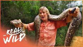 Download Austin Stevens Adventures - Monster Python [Documentary Series] | Real Wild Video