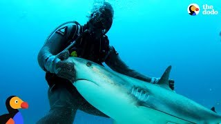 Download Woman Is A Shark Whisperer | The Dodo Video