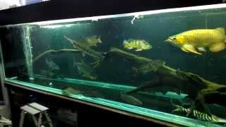 Download Predators tank feeding Video