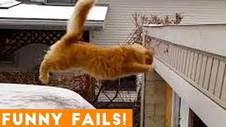 Download TRY NOT to LAUGH Animals FUNNY PET FAILS Compilation 2019 | Epic Pet Videos & Moments Video