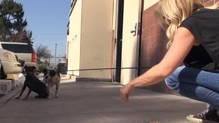 Download After their owner died, they were thrown out to the streets and became homeless. Video