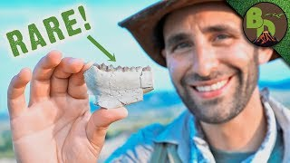 Download Fossil Hunting in the BADLANDS! Video