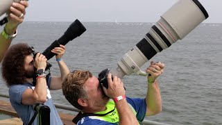 Download Sigma 150-600 Contemporary ″Real World Review″: The BEST Wildlife / Sports lens for under $1,000? Video