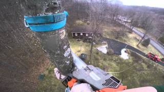 Download Arborist Tree Removal Featuring Home Made Throw Ball Cannon Video
