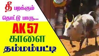 Download Jallikattu Ak 57 Kalai Video