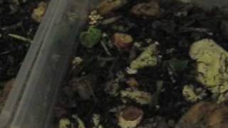 Download composting poop with worms: part deux Video
