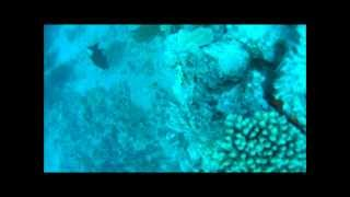 Download Livebait closeup view of the Reef!! Underwater Fishing video!! Video