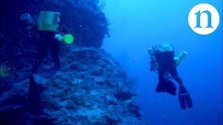Download Corals and hurricanes: Deep reefs under threat Video