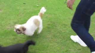 Download England Vlog - Dog Fight, Elephants and Football! Video