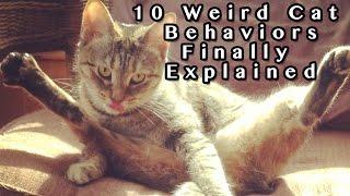 Download 10 Weird Cat Behaviors Explained Video