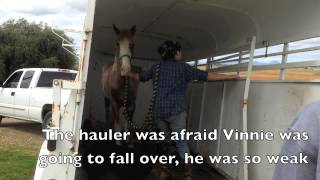 Download Vinnie's Story Video