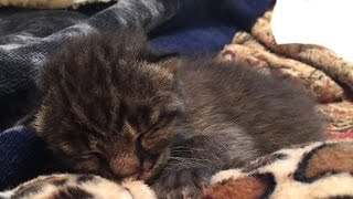 Download The Sad Loss Of Journey The Rehab Baby Bobcat Video