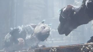 Download The Last Guardian Trico vs. Second Guardian Video