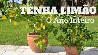 Download Tenha Limão o Ano Inteiro - Faça muda de pé de limão Video