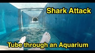 Download Shark Attack : Tube through an Aquarium : Atlantis The Palm in Dubai Video