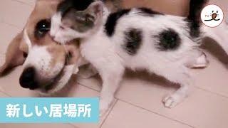 Download 温かい居場所を見つけたニャンコ😊 【PECO TV】 Video