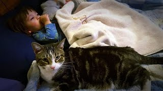 Download My Cat From Heaven: Herbie Video