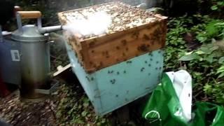 Download tecnologia moderna em apicultura parte 2 Video