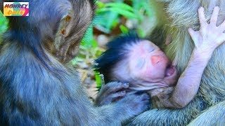 Download Oh! Newborn baby can't see anything yet|Youngest mom give birth newborn so lovely|Monkey Daily 564 Video
