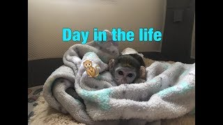 Download Baby monkey | A day in the life of Max Video