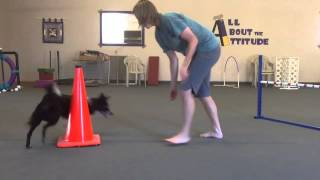 Download Teaching Left And Right To Your Agility Dog Video