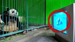 Download 13 STRANGE Mating Behaviors of Animals Video