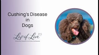 Download Dr. Mary Discusses Cushing's Disease in Dogs Video