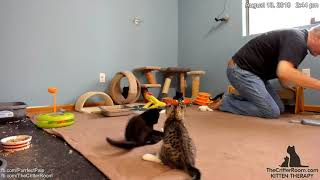 Download Five Guys Kittens - Afternoon 2018-08-13 Video