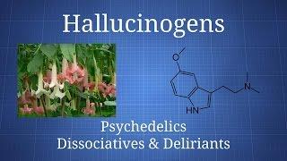 Download Hallucinogens: How Psychedelics, Dissociatives, & Deliriants Differ Video