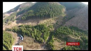Download Останні дні Карпат: тотальне вирізання карпатського лісу Video