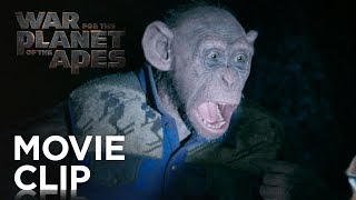 Download War for the Planet of the Apes | ″Bad Ape and Maurice″ Clip | 20th Century FOX Video