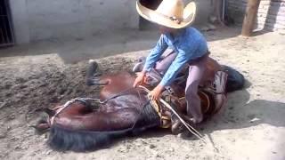 Download caballos bailadores sergio ramirez Video