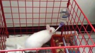 Download 寵物日記-兔子逃獄技巧是會進化的 Video