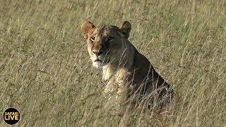 Download safariLIVE - Sunrise Safari - July 20, 2019 Video