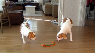 Download Dog and Sister Team Up to Destroy Giant Centipede Video