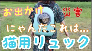 Download かわいい猫用リュックを彼女が紹介します[子猫] Video